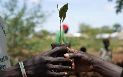 Refugiado do Sudão do Sul se torna um ativista pela plantação de árvores em Uganda