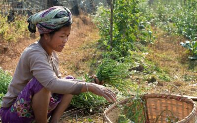 Refugiados Rohingya e habitantes de Bangladesh recebem ajuda para plantar comida